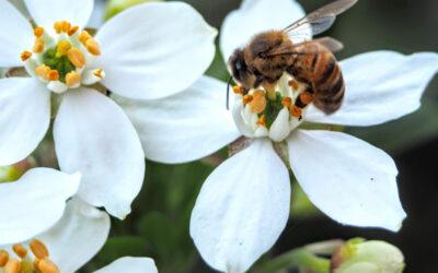 Produkty pszczele w kosmetykach